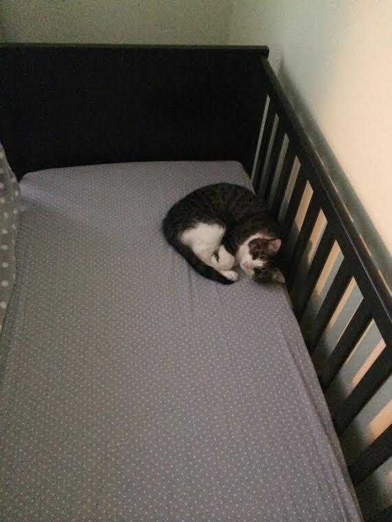 Tuna in crib